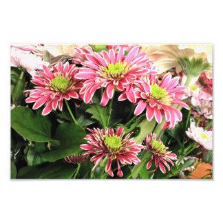 Chrysanthemums Photo Art