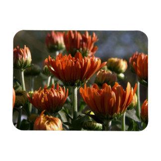 Chrysanthemums Rectangular Magnets