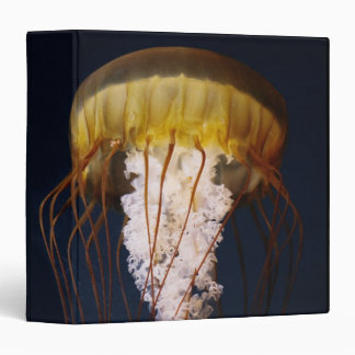 Chrysaora fuscescens,  Pacific Sea nettle 3 Ring Binder