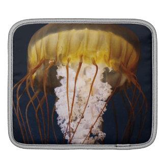 Chrysaora fuscescens,  Pacific Sea nettle iPad Sleeve