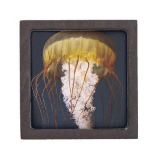 Chrysaora fuscescens,  Pacific Sea nettle Keepsake Box