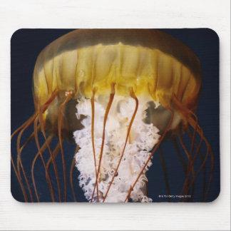 Chrysaora fuscescens,  Pacific Sea nettle Mouse Pad