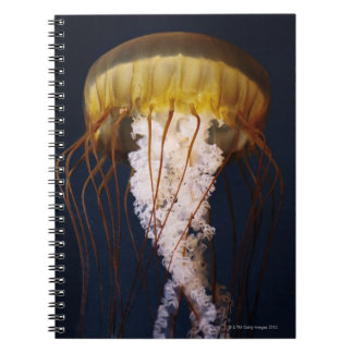 Chrysaora fuscescens,  Pacific Sea nettle Notebook