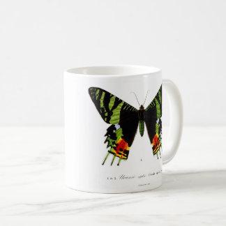 Chrysiridia rhipheus and nishikiootsubamega coffee mug
