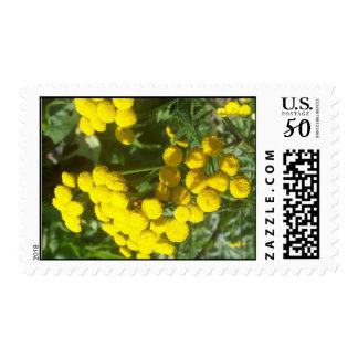 Chrysocephalum Flambe Postage Stamps