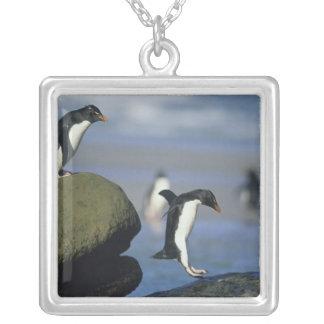 Chrysocome de los pingüinos, del Eudyptes de Rockh Colgantes Personalizados