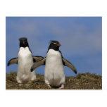 Chrysocome del Eudyptes de los pingüinos de Rockho Tarjeta Postal