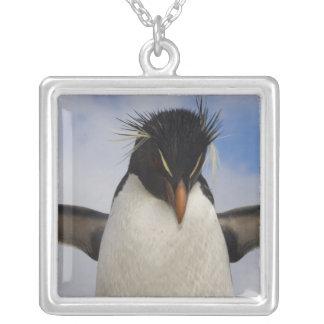 Chrysocome del Eudyptes del pingüino de Rockhopper Colgante Cuadrado