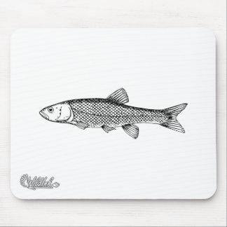 Chub Fish Drawing Mouse Pad