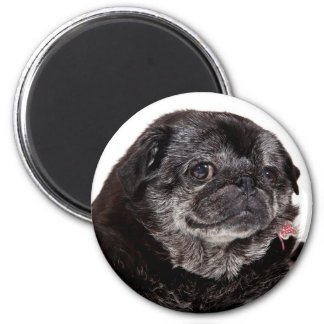 Chubbs The Wampug Magnet