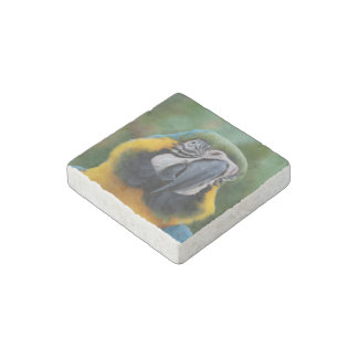 Chubby Cheeked Blue and Gold Macaw Stone Magnet