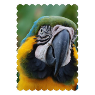 Chubby Cheeked Blue and Gold Macaw Invite