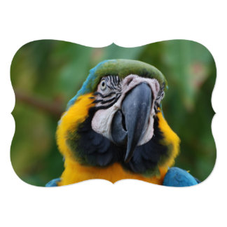 Chubby Cheeked Blue and Gold Macaw Invitations