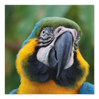Chubby Cheeked Blue and Gold Macaw Personalized Invitation