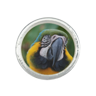 Chubby Cheeked Blue and Gold Macaw Rings
