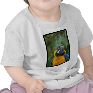 Chubby Cheeked Blue and Gold Macaw Tshirts