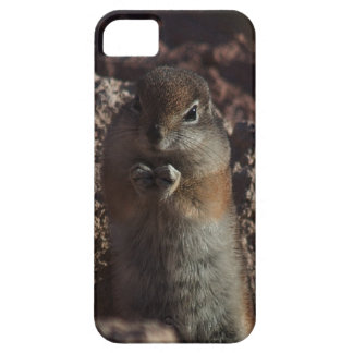 Chubby Chipmunk iPhone 5 Cases