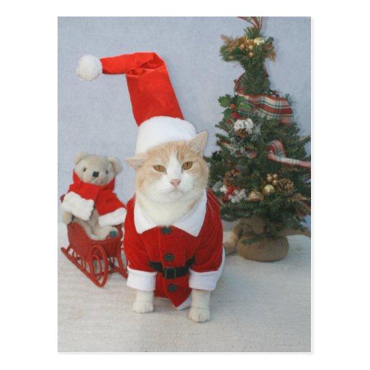 Chubby Santa Cat Postcard