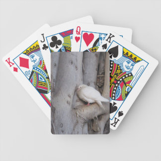 Chubby white dove in tree deck of cards