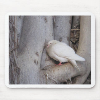 Chubby white dove in tree mousepads