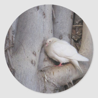 Chubby white dove in tree sticker