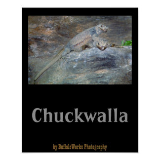 Chuckwalla Head Stand Poster Posters