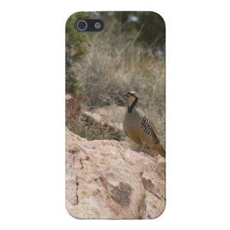 Chukar iPhone 5 Cover - Savvy