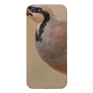 """Chukar iPhone Case """"Savvy"""" Cases For iPhone 5"""