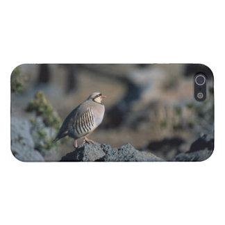 Chukar iPhone Cover - Savvy iPhone 5/5S Covers