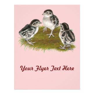 Chukar Partridge Chicks Personalized Flyer