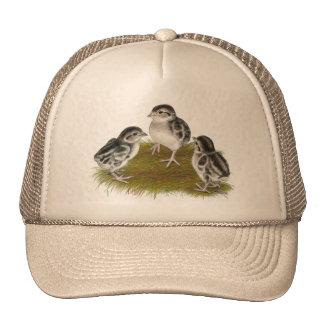 Chukar Partridge Chicks Trucker Hat
