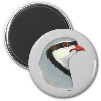 Chukar:  Partridge Head Magnet
