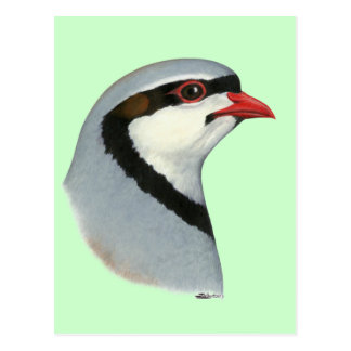 Chukar:  Partridge Head Postcard