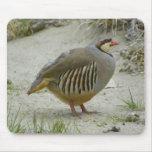 Chukar Partridge Mouse Pad