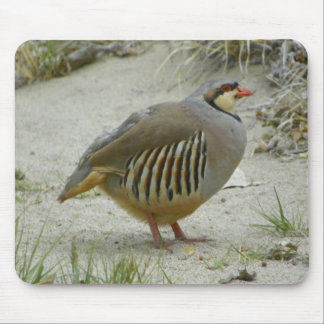 Chukar Partridge Mouse Pads