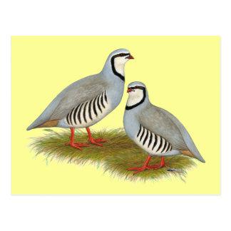 Chukar Partridge Pair Postcard