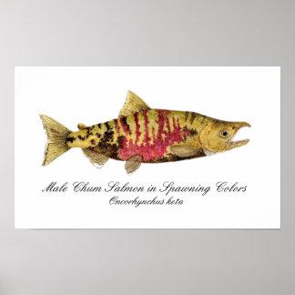 Chum Salmon Poster