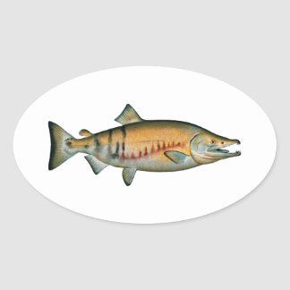 Chum Salmon (spawning phase) Oval Sticker