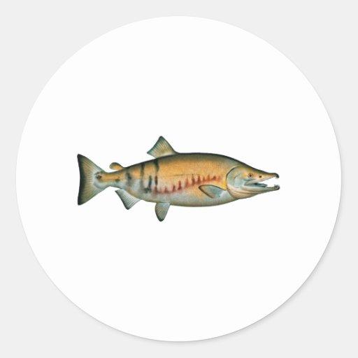 Chum Salmon (spawning phase) Round Sticker