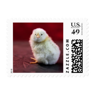 Chunky Chicky Postage Stamps