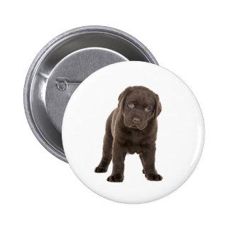 Chunky Chocolate Labrador Puppy Pinback Button
