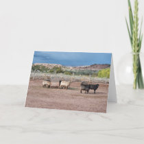 Churro Sheep Note Card