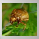 cicada1 impresiones