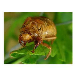 cicada1 postales