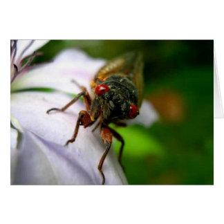 Cicada Card
