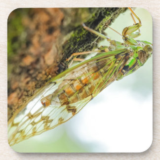 Cicada insect coaster