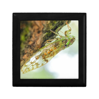Cicada insect gift box