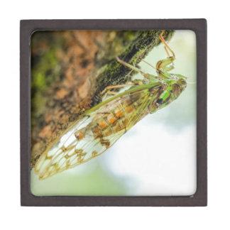 Cicada insect jewelry box