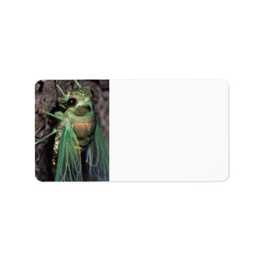Cicada Label