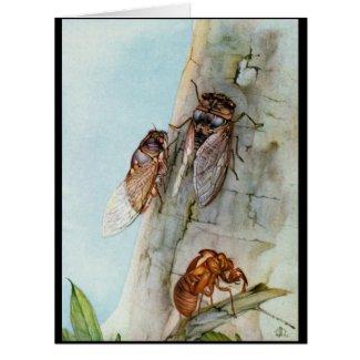 Cicada Life Cycle 1921 Card